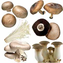 An Introduction To Fresh Canadian Mushrooms