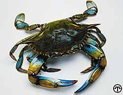 Crabmeat Nicoise