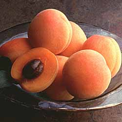 California Fresh Apricots